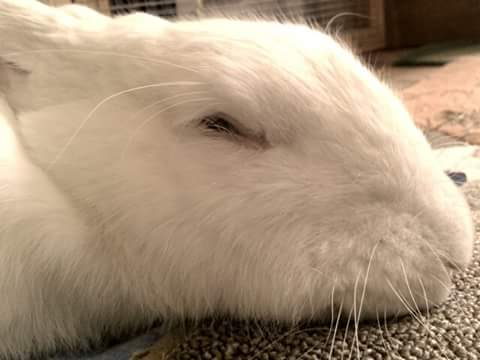 Rabbits-Sleeping