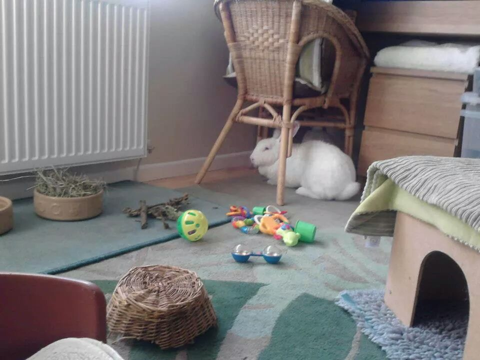 Rabbits_Playroom